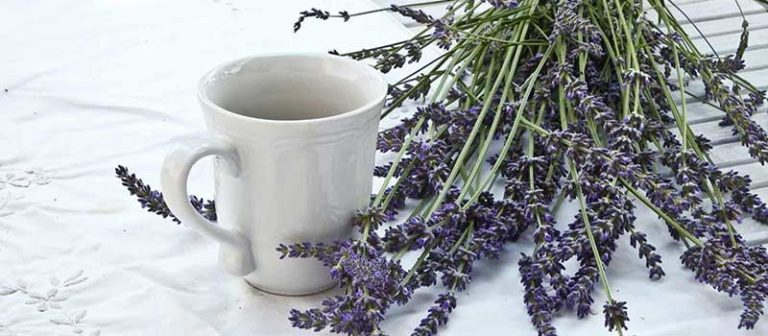 Lavender Latte Guide