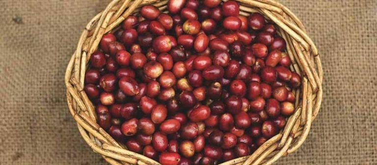 Sumatra Coffee Guide