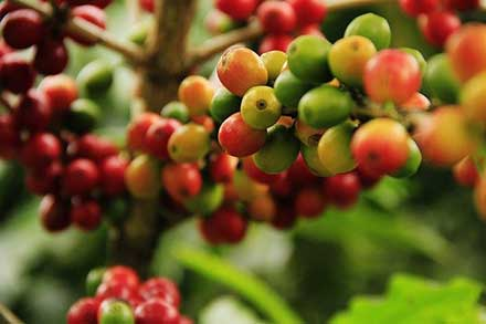 Countries Growing Different Coffee Types