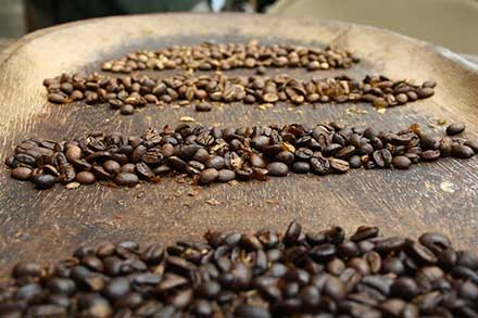 Best Kind of Coffee Beans on the Market