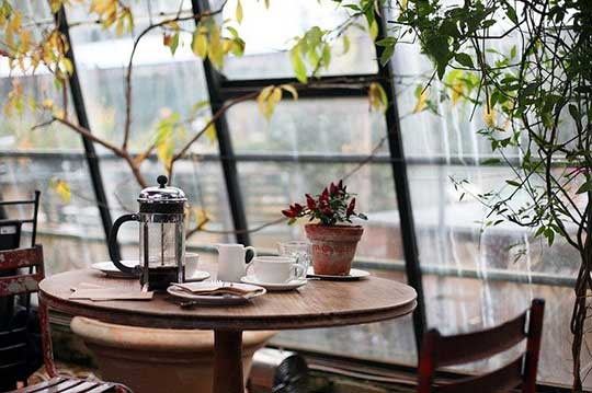 Details on How to Make French Press Coffee